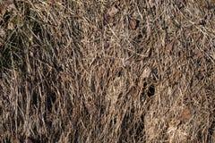 Herbe sèche comme fond photographie stock libre de droits