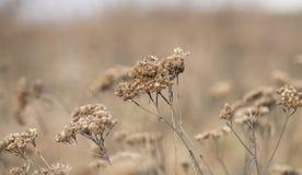 Herbe sèche d'hiver Photo stock