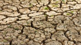 Herbe sèche de sol criqué Images libres de droits