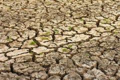 Herbe sèche de sol criqué Image stock