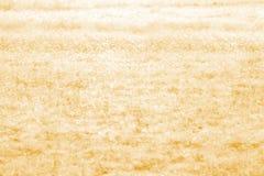 herbe sèche de zone Photos stock