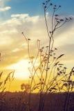 Herbe sèche et coucher du soleil Photo libre de droits