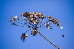 Herbe sèche sensible Photographie stock libre de droits