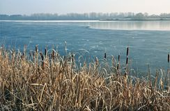 Herbe sèche sur le rivage d'un lac partiellement congelé Photographie stock