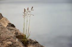herbe s'élevant d'une fente en béton Photographie stock