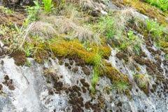 Herbe s'élevant sur des pierres images stock