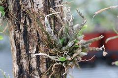 Herbe s'élevant sur l'arbre images libres de droits