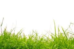 Herbe saine Photo libre de droits