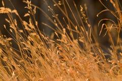 Herbe secouée par le vent Photographie stock libre de droits