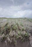 Herbe soufflée par vent sur la dune de sable.  Côte de l'Orégon Photo libre de droits