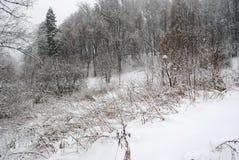 Herbe sous la neige Photo libre de droits