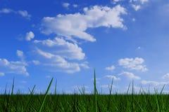 Herbe sous le ciel nuageux Photographie stock