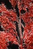 Herbe sous-marine Photo libre de droits