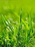 Herbe Sunlit photo libre de droits