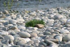 Herbe sur des pierres Photographie stock libre de droits
