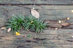 Herbe sur en bois dans le jardin Photographie stock libre de droits
