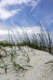 Herbe sur la dune Photographie stock libre de droits