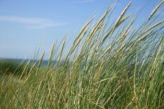 Herbe sur la dune Photographie stock