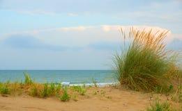 Herbe sur la plage Images libres de droits
