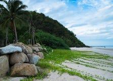 Herbe sur la plage Photo libre de droits