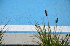 Herbe sur la plage image libre de droits