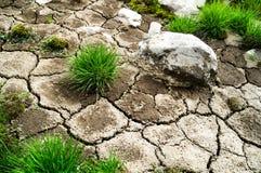 Herbe sur la terre sèche Photos stock
