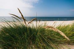 Herbe sur le bord de la mer baltique arénacé et venteux photos libres de droits
