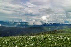Herbe sur le plateau Lago-Naki photographie stock