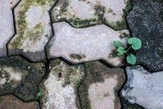 Herbe sur une brique image stock