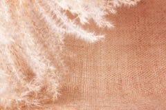 Herbe éternelle pelucheuse sur la toile de jute Photographie stock libre de droits