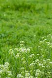 Herbe vert clair à la ferme Photo stock