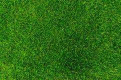 Herbe vert clair Images libres de droits