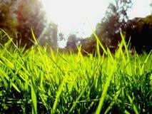 Herbe vert clair photographie stock libre de droits