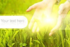 Herbe verte émouvante de mains Image libre de droits
