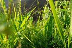 Herbe verte Photo stock