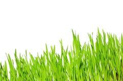 Herbe verte Image stock