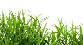Herbe verte. Photographie stock libre de droits