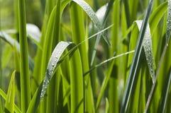 Herbe verte photographie stock libre de droits