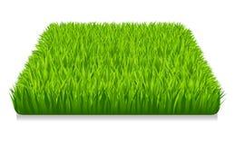 Herbe verte illustration de vecteur