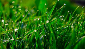 Herbe verte (4) photographie stock libre de droits