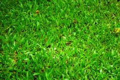 Herbe verte Photos stock