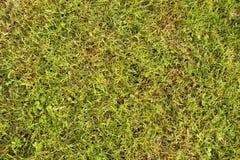 Herbe verte Image libre de droits