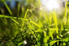 Herbe verte Photographie stock