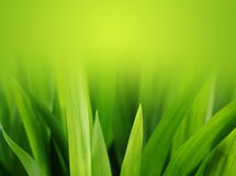 Herbe verte abondante Photographie stock libre de droits