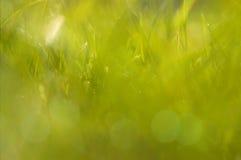 Herbe verte abstraite ensoleillée Images libres de droits