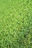 Herbe verte artificielle photographie stock