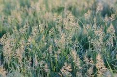 Herbe verte au coucher du soleil Photo libre de droits