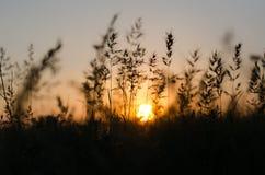 Herbe verte au coucher du soleil Photos stock