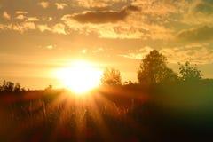 Herbe verte au coucher du soleil jaune Photographie stock libre de droits