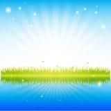 Herbe verte avec de l'eau propre Photo libre de droits